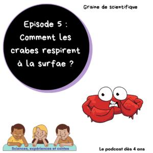 Comment les crabes respirent à la surface ?