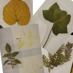 Feuilles d'herbier plastifiées pour une meilleure manipulation par les enfants